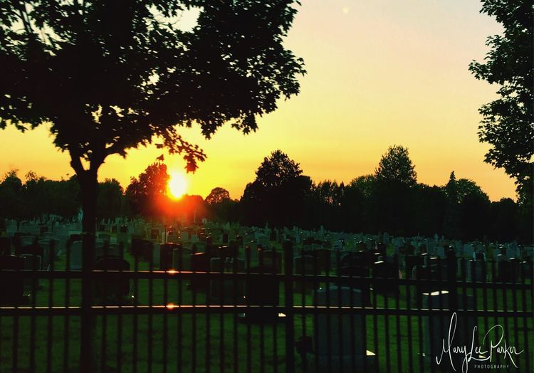 Sunset in the graveyard Tree Cemetery Nature No People Beauty In Nature Outdoors Sunset graveyard Season summer Eyeem Southington, Conn