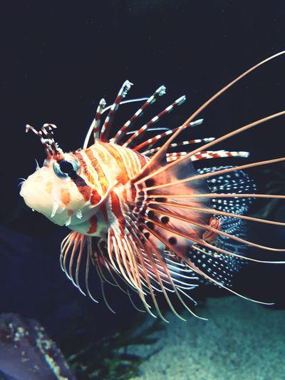 Underwater One