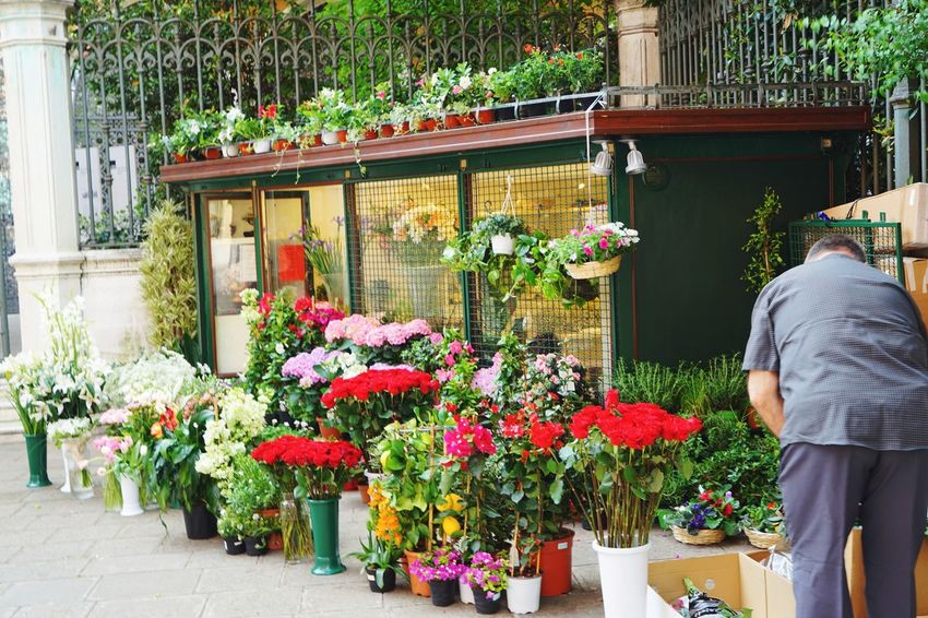Flower shop Flower Store Business Finance And Industry Adults Only Adult Plant One Man Only Retail  Men People Lifestyles Outdoors Multi Colored Customer  One Person Only Men Occupation Business Nature Plant Nursery