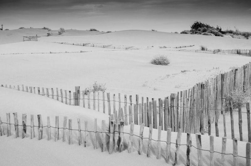 Black & White Camargue Espiquette Fence France Plage Sand Dune