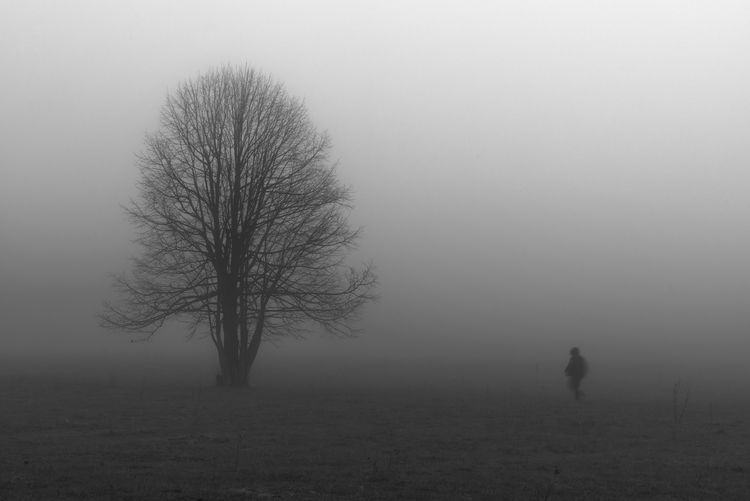 Silhouette bare tree on field during foggy weather