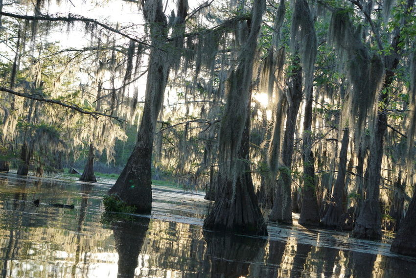 Nature Tree Water Beauty In Nature Tranquility Reflection Scenics Lake Adventure Wanderlust Sony A6000 Sonyimages Travel Roadtrip Nofilter Noedit Travel Photography Traveling Texan Trip Swamp Moss Mossporn Nature Photography