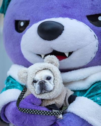 Mascot Akkuma with French Bulldog 2018 Bear Bulldog Mascot Akkuma Childhood Close-up Day Dog No People Outdoors Purple Snowfestival Stuffed Toy Teddy Bear Toy