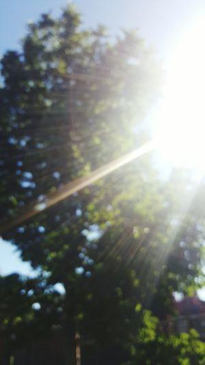 Sunbeam No