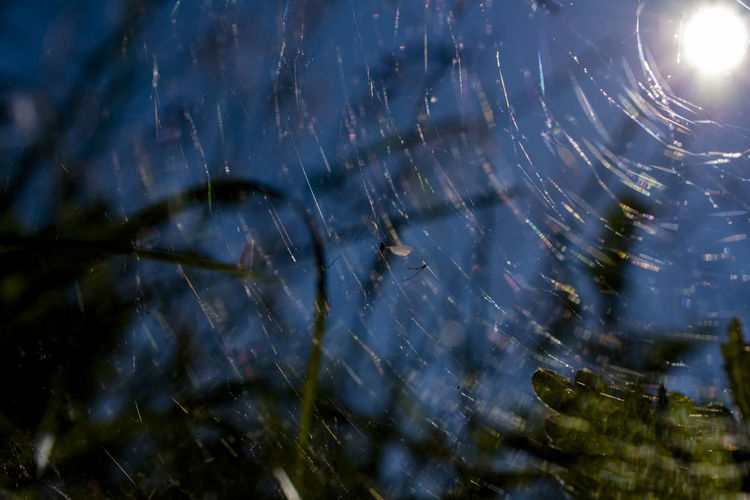 Nature Spider Web No People Selective Focus Fragility Close-up Sky Drop Water Vulnerability  Beauty In Nature Day Spider Wet Outdoors Plant Motion Lens Flare Low Angle View Complexity Web