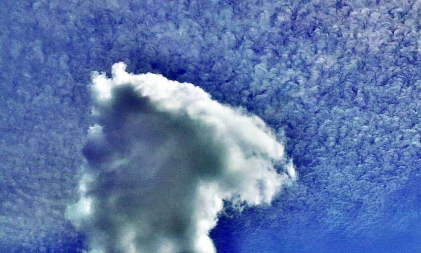 Cirrocumulus fibratus and a lone cumulus Daydreaming