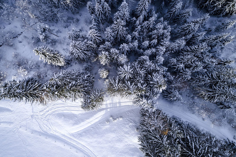 Aerial Shot Drone  Aerial View Beauty In Nature Cold Temperature Day Forest Freshness Frozen Growth Landscape Nature No People Outdoors Pinaceae Pine Tree Scenics Sky Snow Snowdrift Snowflake Snowing Spruce Tree Tree Weather Wilderness Area Winter