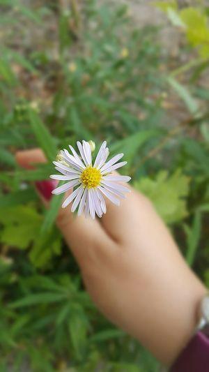 I Like Flowers And Photography