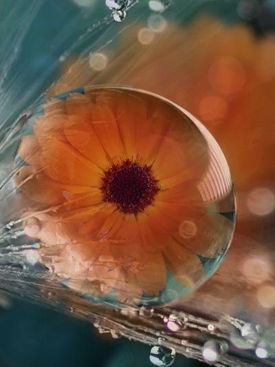 капля капли цветок  вода искажение эффект