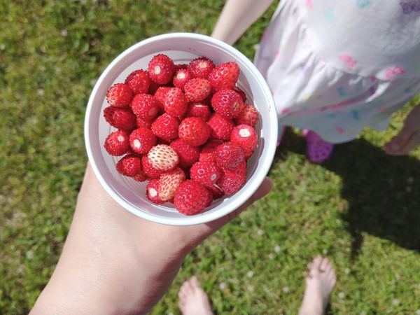 Strawberry Wild Strawberries Healthy Eating Human Hand Freshness Red Hand Food Outdoors Summer Strawberries Holding Summertime Sommergefühle Berries Personal Perspective Day