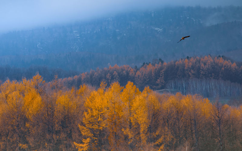 Larches Flying