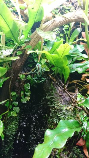 High angle view of plants in water