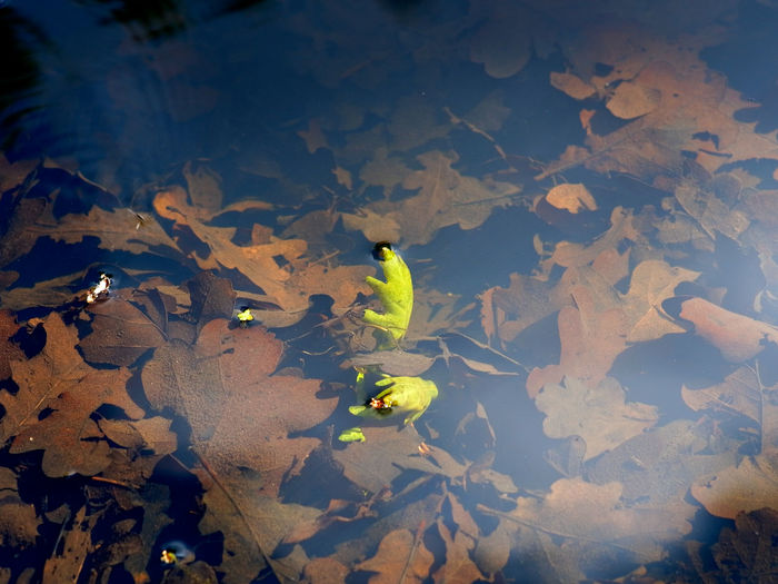 High angle view of yellow leaves floating on water