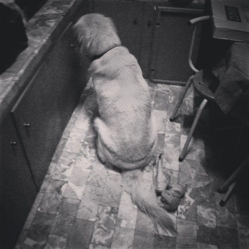 อย่างอนไปเลยนะที่รักอย่าทำอย่างนั้นซิ ชั้นแค่อัธยาศัยดีไปหน่อย~~~ Remorse Dog Goldenretriever Pet13