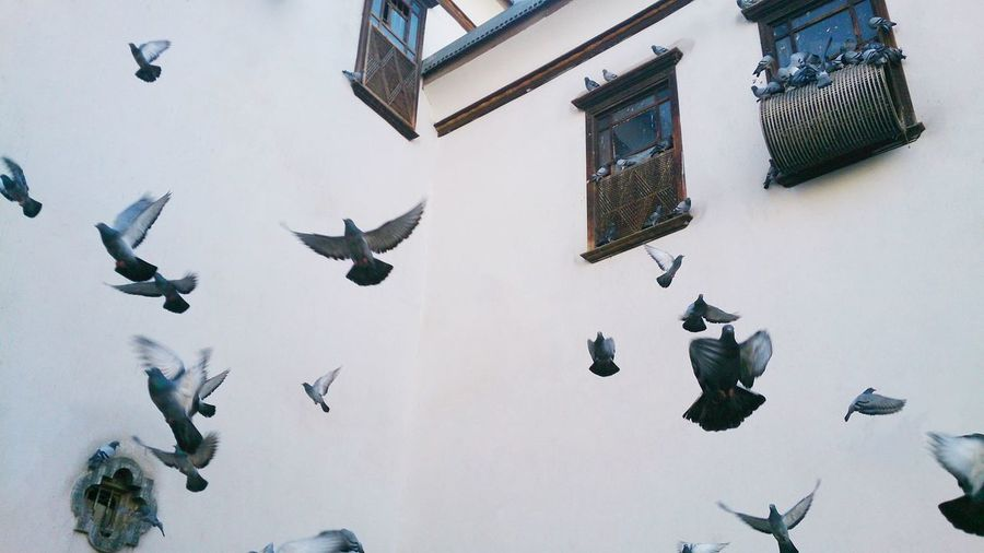 Bird Building Day Flock Of Birds Flying House Nature No People Window First Eyeem Photo