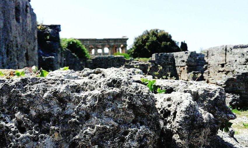 Italie Italy🇮🇹 Italie Ruine Antique Paestum First Eyeem Photo