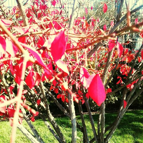 Red Growth Tree Day Beauty In Nature Nature No People Outdoors Pink Color Branch Plant Grass Flower Close-up Freshness Sky