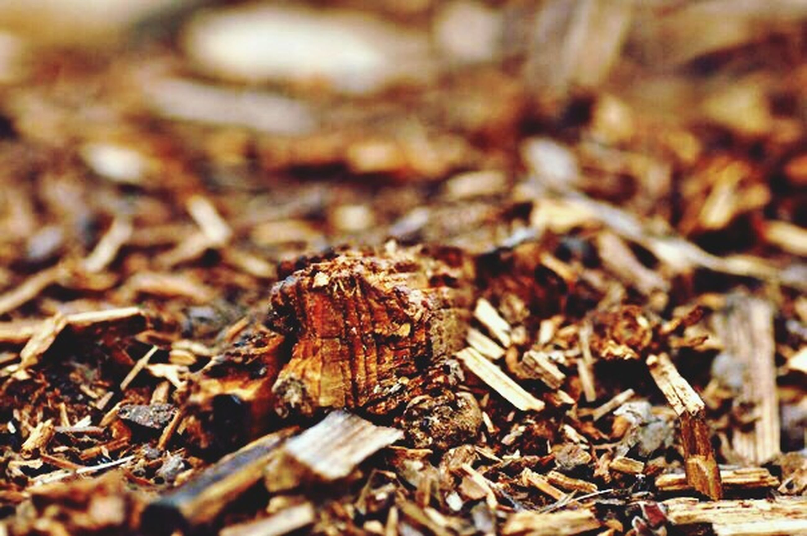 selective focus, close-up, dry, focus on foreground, animal themes, insect, wood - material, animals in the wild, one animal, nature, day, field, outdoors, wildlife, brown, leaf, ground, no people, high angle view, dirt