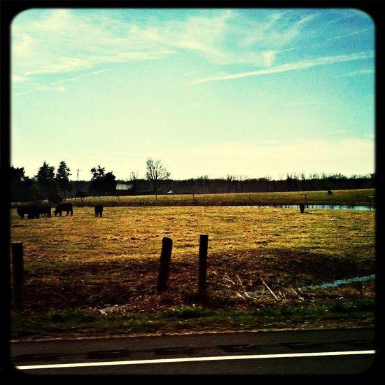 Good morning in the Carolina fields First Eyeem Photo