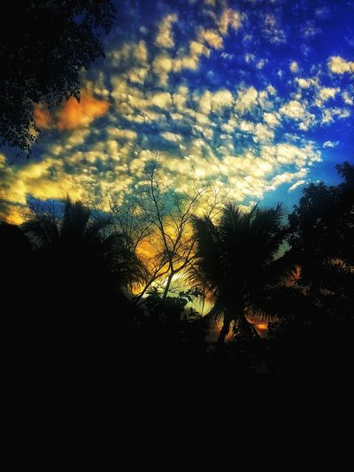 Seeing the dusk Dusk Silhouette Sunset Sky Cloud - Sky Nature Backgrounds No People Scenics Outdoors Tree Beauty In Nature