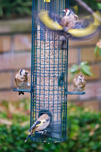 Birds perching on a bird feeder