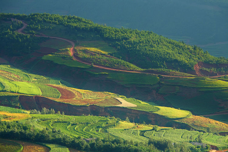 Beautiful landscape of mountain range with beam light in morning at Hongtudi in Dongchuan, Yunnan, Kunming of China Scenics - Nature Landscape Environment Green Color Beauty In Nature Tranquil Scene Tranquility Land Plant No People Non-urban Scene Day Nature Growth Mountain Tree Agriculture Rural Scene High Angle View Idyllic Outdoors Plantation China