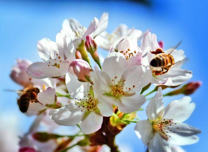 Colors Colorful Colors Of Nature Nature Nature_collection EyeEm Nature Lover Naturelovers Beautiful Nature Bee Bees Macro Beauty