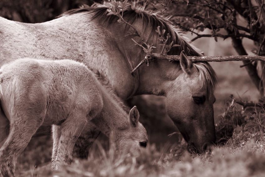Mother And Son Animal Themes Mammal Two Animals No People Animals In The Wild Day Outdoors Domestic Animals Nature Monochrome B&W Magic Blackandwhite