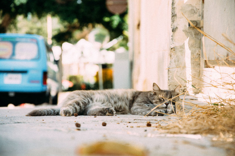 Soft kitty, warm kitty ... VSCO Animal Themes Cat Close-up Day Domestic Animals Domestic Cat Feline Lying Down Mammal Nikonphotography No People One Animal Outdoors Pets Vscofilm