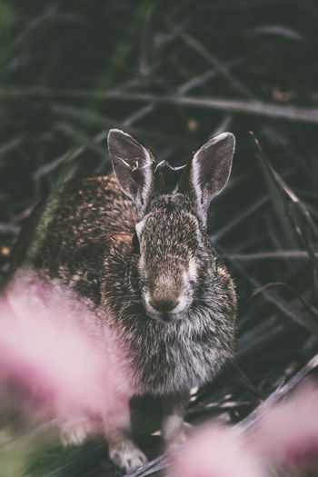 Pink Pond Rabbits Swamp Animal Themes Animal Wildlife Animals In The Wild Close-up Day Eye Flower Indoors  Looking At Camera Mammal Nature No People One Animal One Eye Pin Pink Color Portrait Rabbit Reed