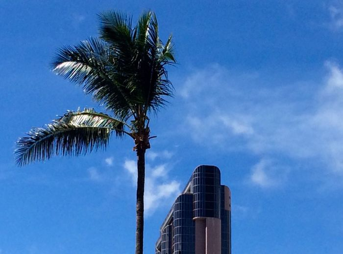 Minimalism Palm