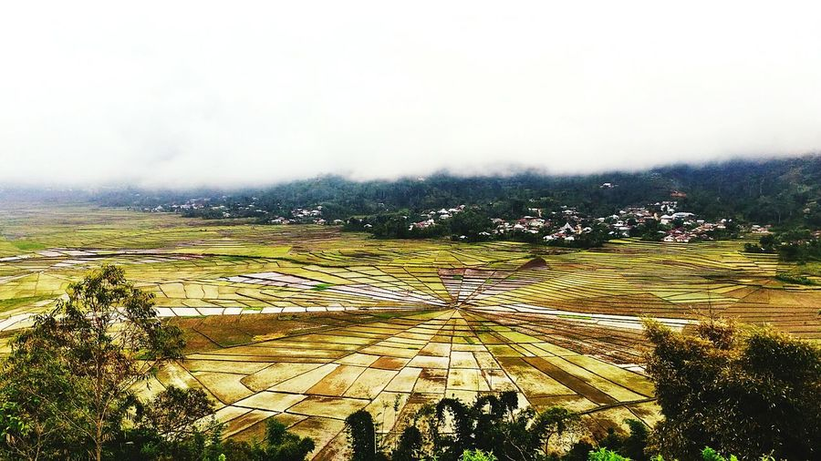 Colour Of Life PicturePerfect Pictureoftheday Picture Photoshoot Photooftheday Photography First Eyeem Photo Beautiful Day Spiderweb Ricefield Beautiful Color Nice Hunting Life Love Selfie ✌ Huntingphoto Green Landscape Landscape #Nature #photography Awesome Excellent Shot Magic Place