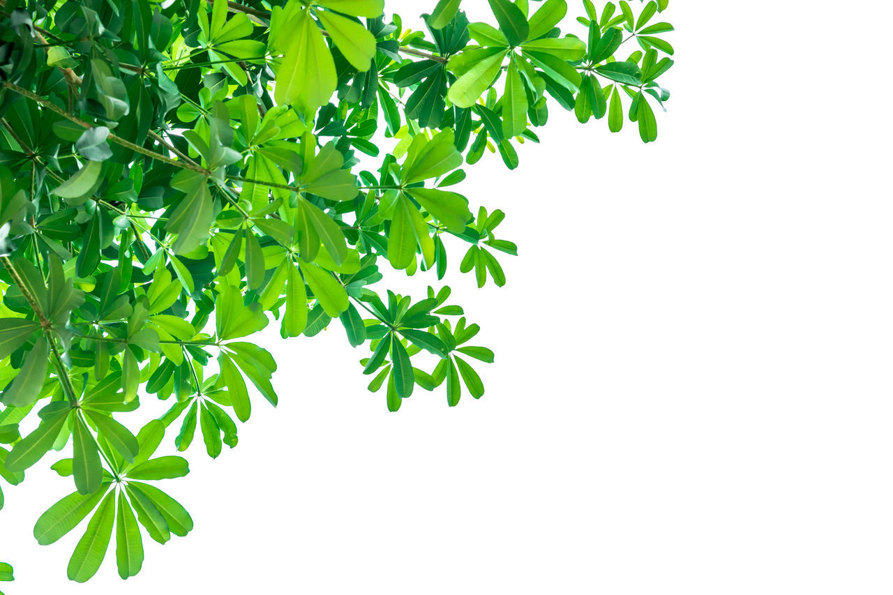 CLOSE-UP OF FRESH GREEN PLANT AGAINST GRAY BACKGROUND