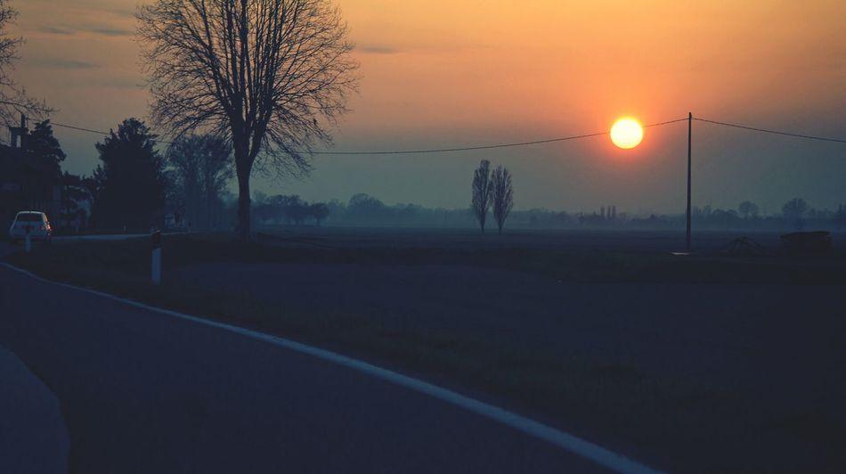 Tree Sunset Fog Bare Tree Dawn Sport Sun Sky Silhouette Orange Color