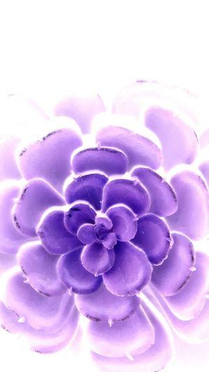 Purple Close-up