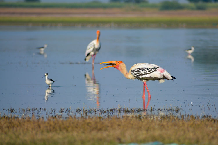 View of painted storks on beach