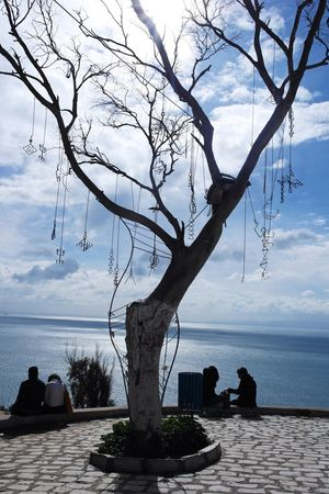 Sea Tree Water Sky Nature Beauty In Nature Colour Your Horizn Tranquility Horizon Over Water Cloud - Sky Scenics Bare Tree Branch Tranquil Scene Day Outdoors Silhouette