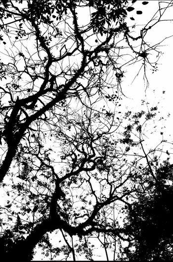 Black And White Photography Wanderlust Black And White Urban Exploration Blackandwhite Walking Around The City  Singaporeslinging TreePorn Tree Silhouette Hugging A Tree