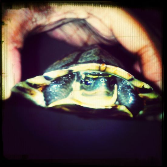 our newest love Pet Turtle Walking Around Beautiful Nature