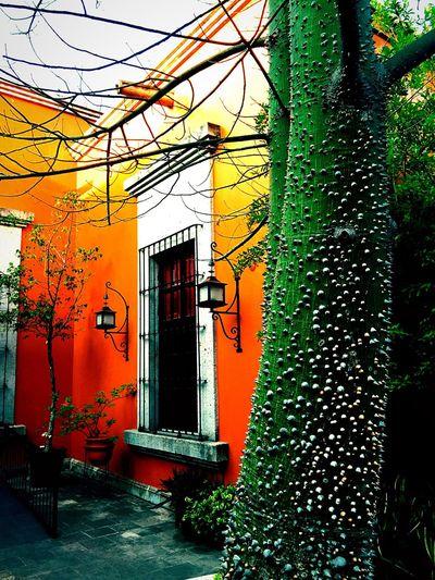 Latin America Spanish Colonial Spanish Arquitecture Villa Casita Tequila,jalisco Mexico House Estância Hacienda Finca Orange Adobe Tree Patio Courtyard  Courtyard House The Architect - 2017 EyeEm Awards The Week On EyeEm