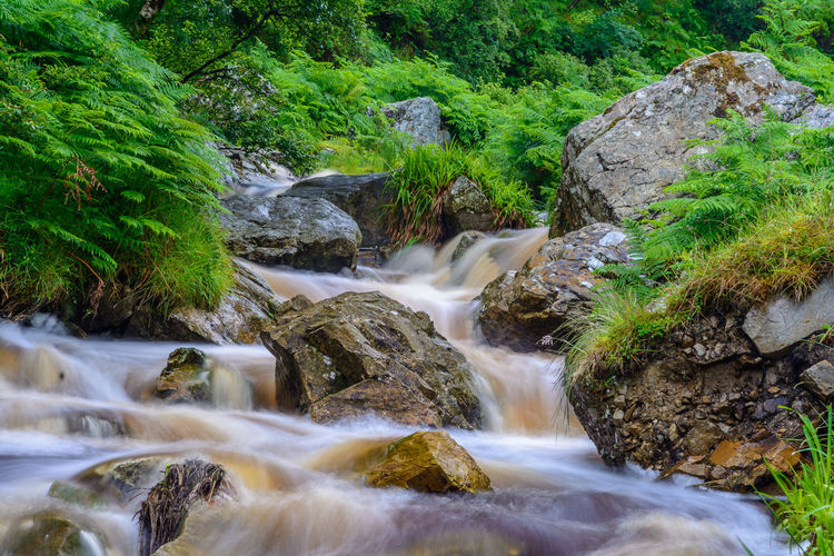 After the rain Green Color Ireland Beauty In Nature Blurred Motion Day Flowing Water Forest Long Exposure Moss Motion Nature No People Outdoors Rapid River Rock - Object Scenics Tranquil Scene Tranquility Tree Water
