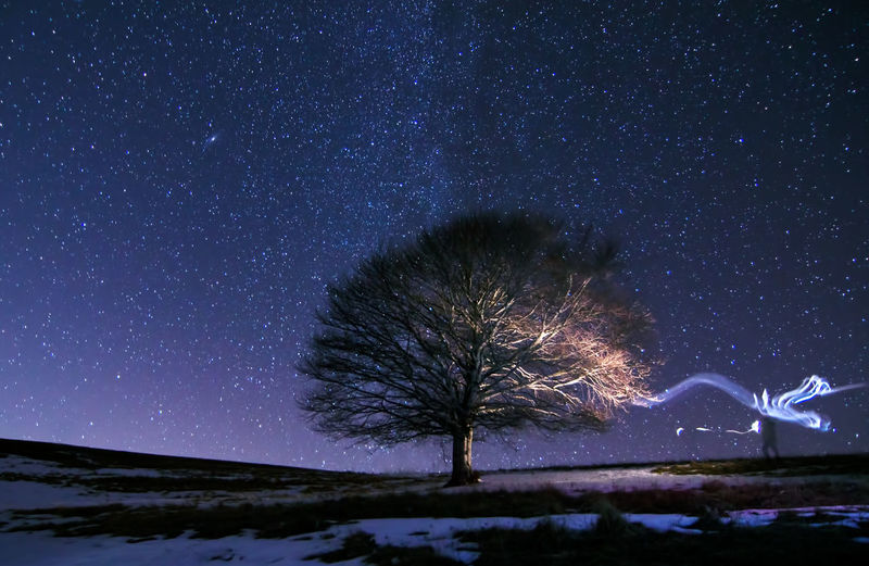 Scenic view of tree under starry sky