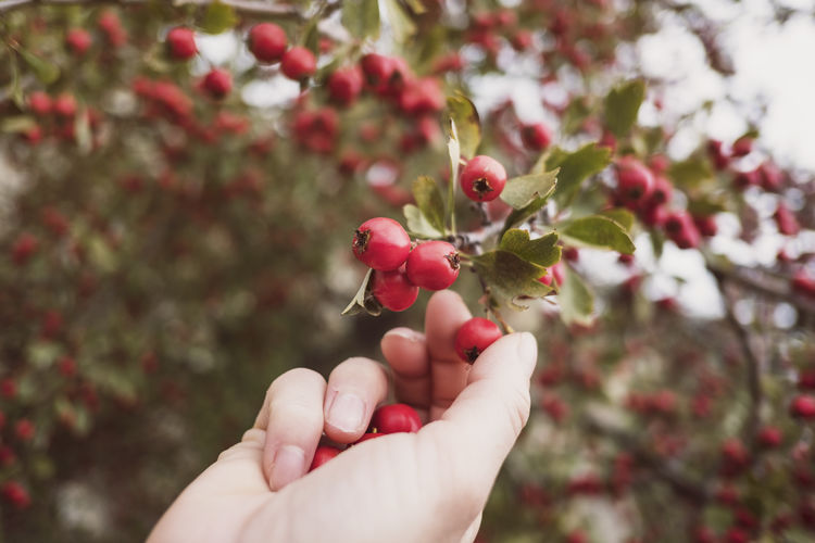 Cropped image of woman hand holding berry outdoors