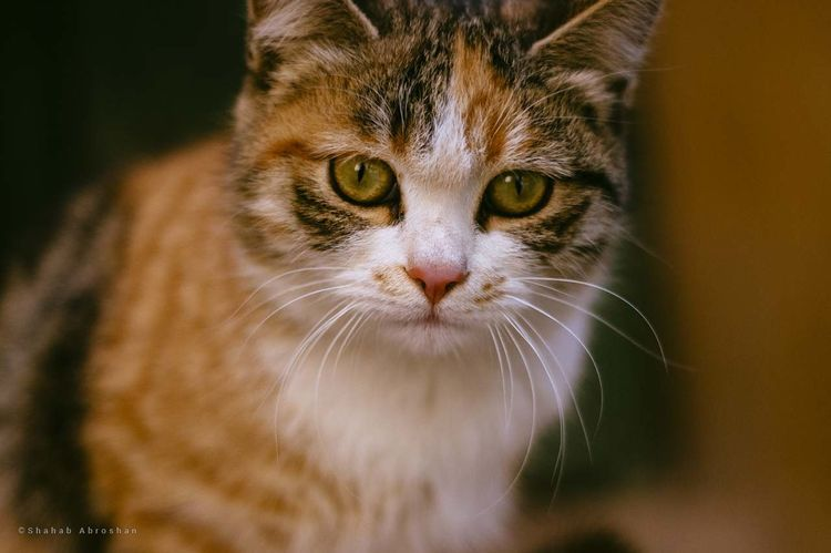 Cat in the mosque Cat Animal Themes One Animal Looking At Camera Close-up Pets Animal Day Front View