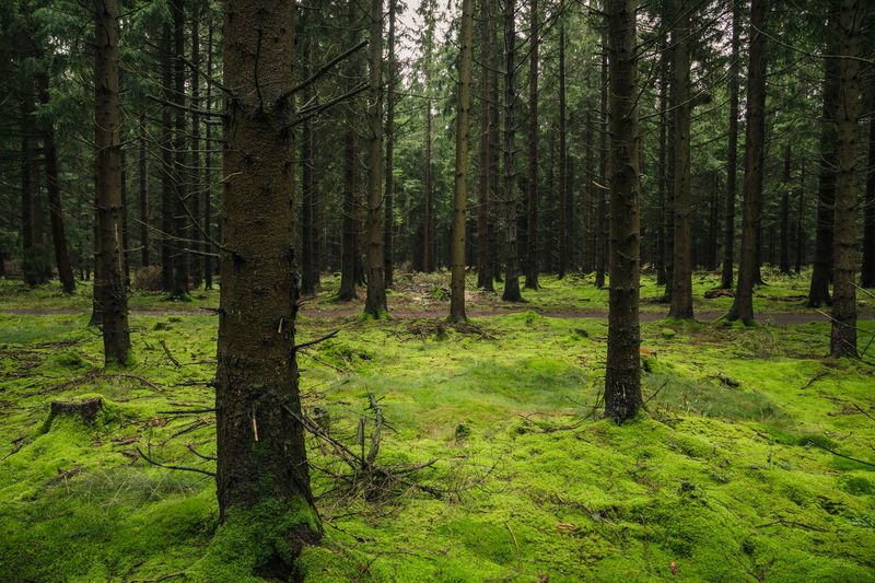 Beauty In Nature Day Forest Grass Green Color Growth Harz Harzmountains Land Lush Foliage Nature No People Non-urban Scene Outdoors Plant Scenics - Nature Trail Tranquil Scene Tranquility Tree Tree Trunk Trunk WoodLand