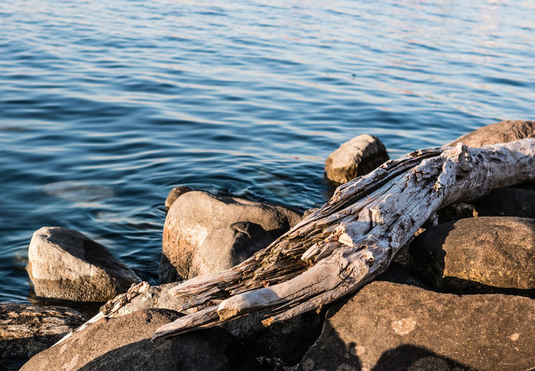Driftwood sitting on rock by a lake Water Rock Nature Wood - Material Day Solid No People Rock - Object Sea Sunlight Wood Outdoors Tranquility Beauty In Nature High Angle View Log Timber Beach Driftwood Wood