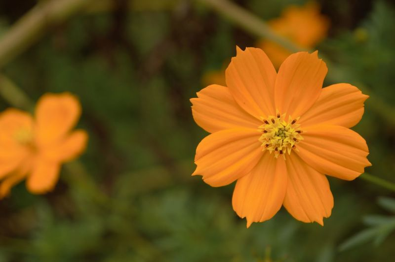 Beauty In Nature Blooming Close-up Day Flower Flower Head Focus On Foreground Fragility Freshness Growth In Bloom Nature Orange Color Outdoors Park - Man Made Space Petal Plant Pollen Selective Focus Yellow First Eyeem Photo