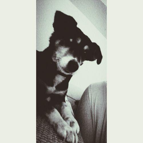 Dog Love ♥ Second Photo .