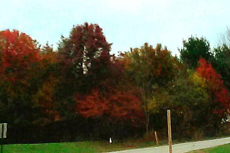 Fall2015 Fall Beauty Pottstown Trees