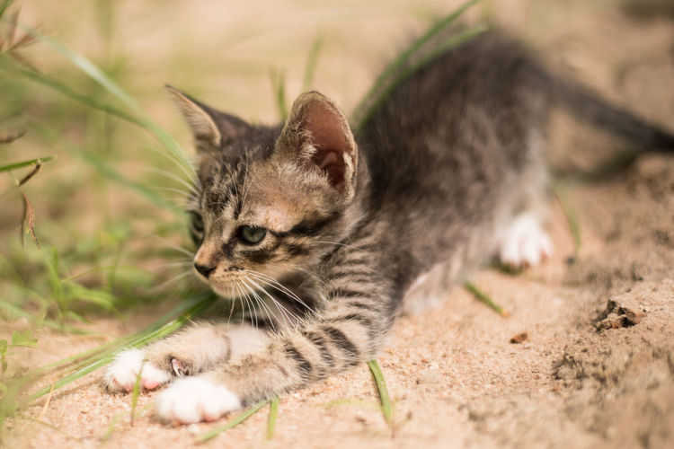Close-up of cat on field
